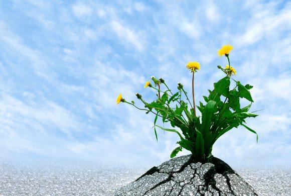 Le difficoltà rafforzano la mente: la resilienza